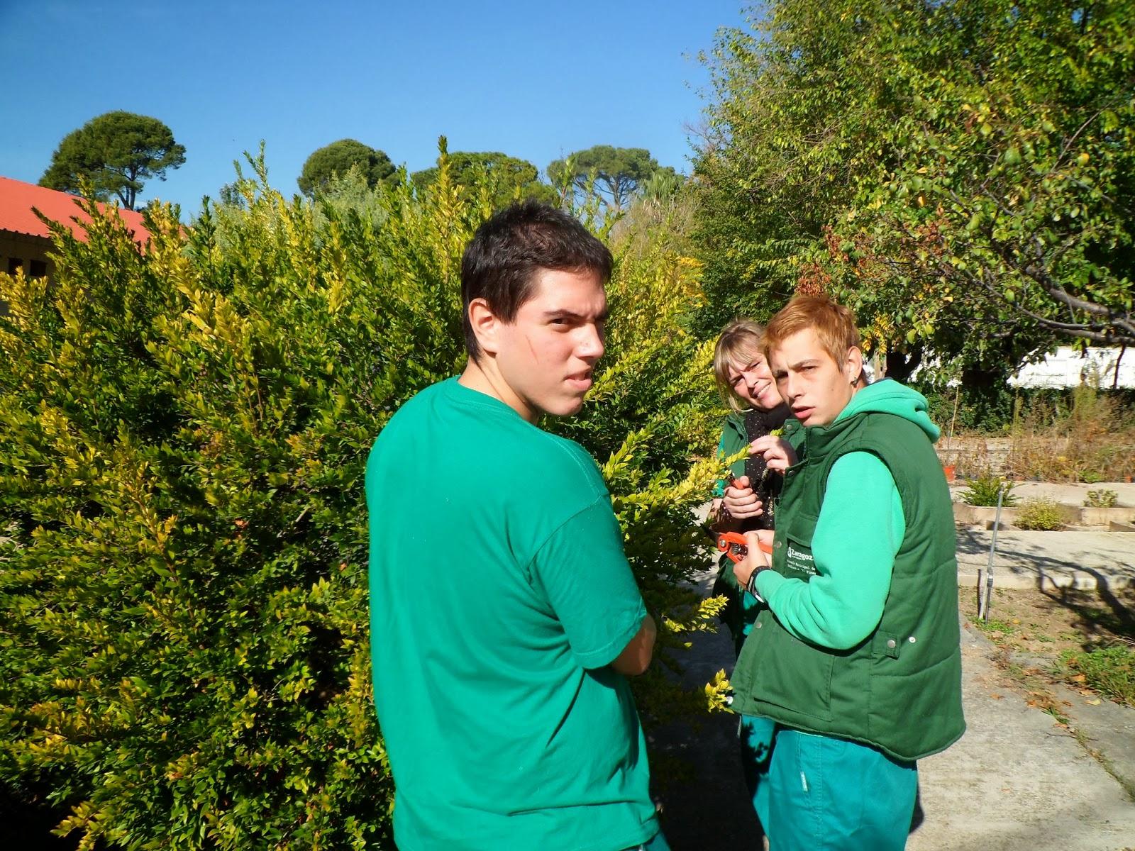 Escuela municipal de jardiner a el pinar operarios for Escuela de jardineria
