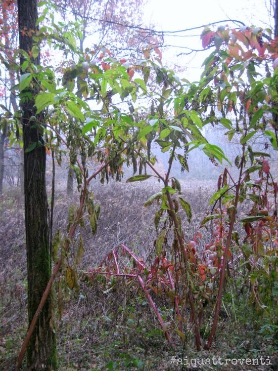 aiquattroventi-autunno-rami