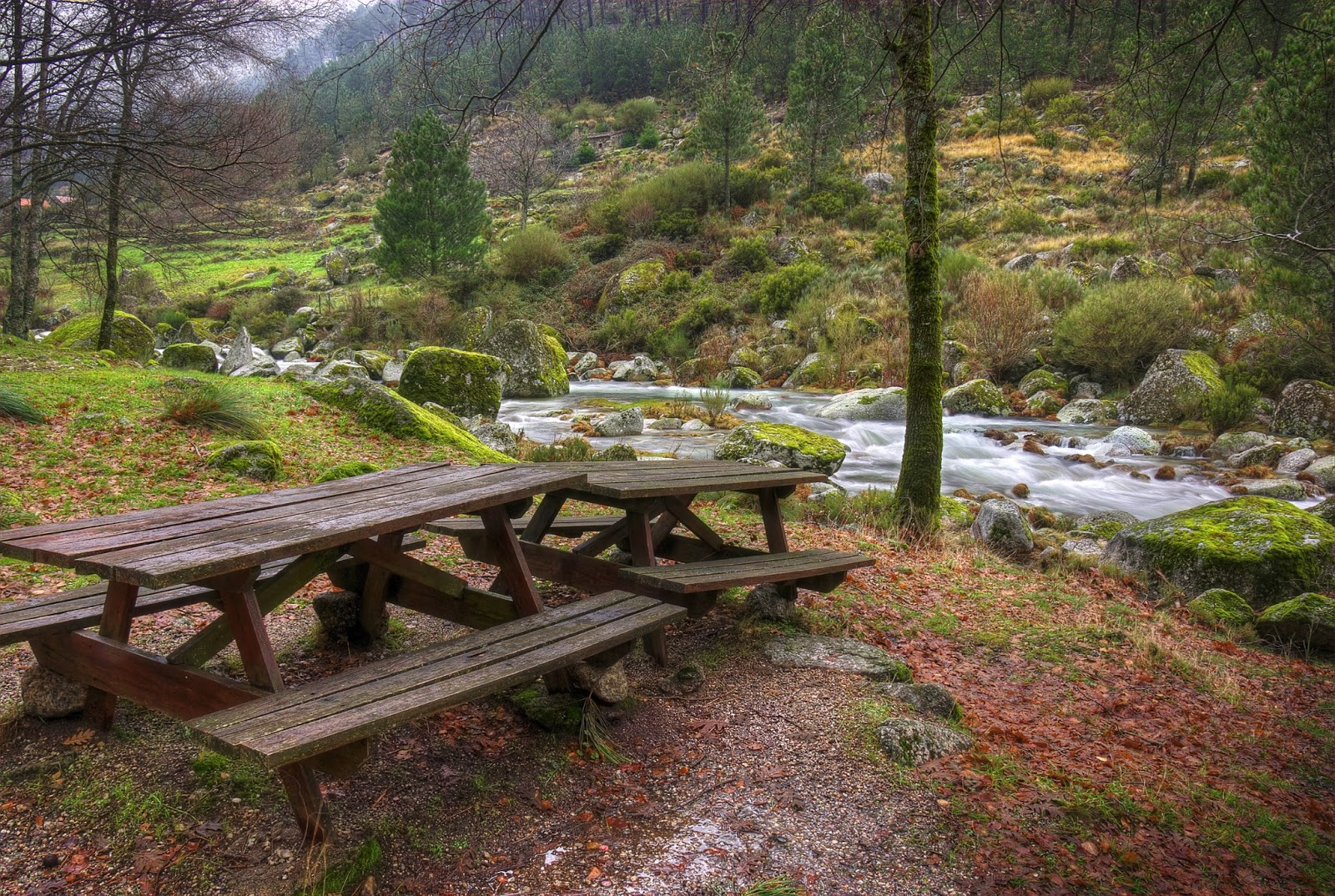 http://3.bp.blogspot.com/-2n5FWem0DjQ/UVUIVF9RVEI/AAAAAAABufQ/1VqjKk98Gbk/s1600/hermoso-paisaje-junto-al-r%C3%ADo-de-agua-cristalina-y-las-monta%C3%B1as-bosque-de-pinos.jpg
