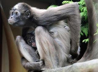 ảnh đẹp hình khỉ