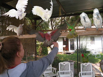 Barb's flying birds