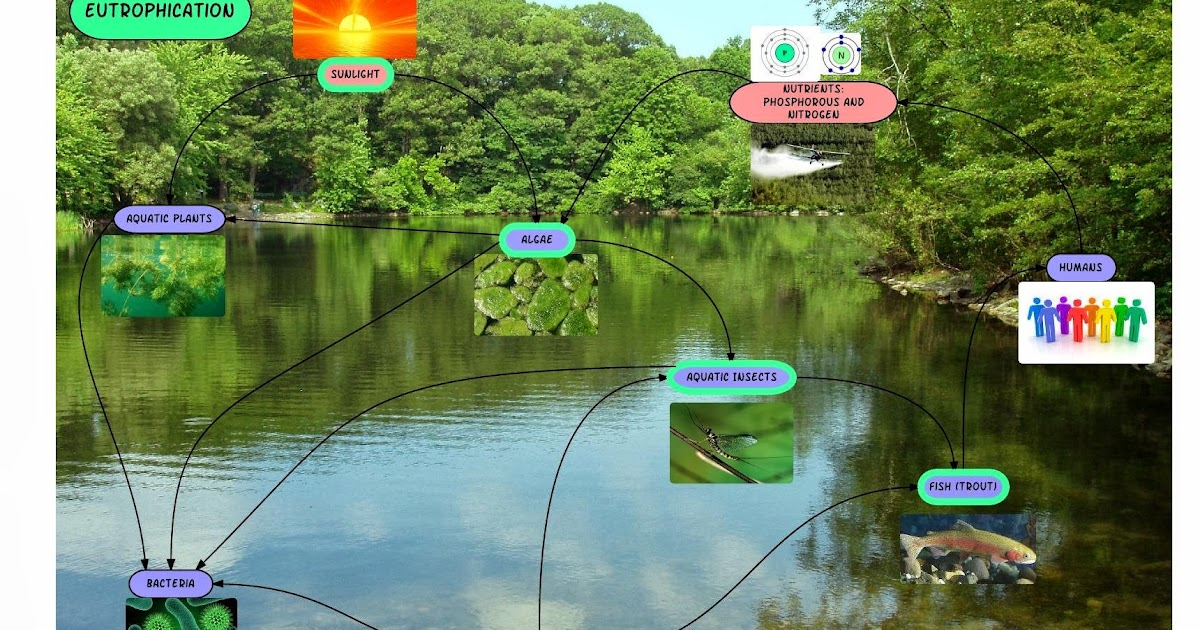 ACDS Environmental Science Eutrophication Image