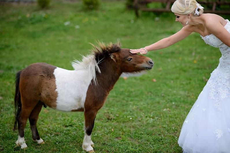 žirgai vestuvėms pakruojyje