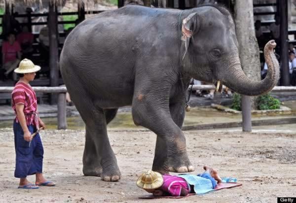 5 Masaje Elefante