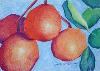 colored pencil drawing of sunquats, copyright Rose Welty