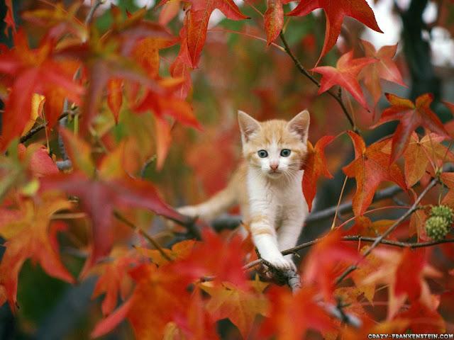 Autumn Animal Images2