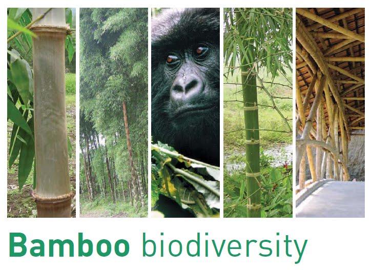 Bamboo Biodiversity