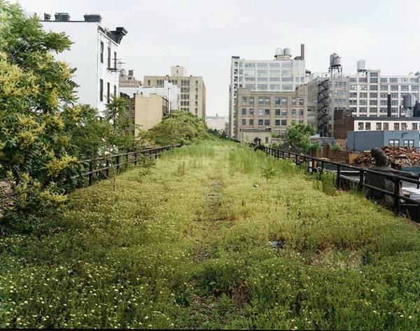 high line park in new york krunal shah. Black Bedroom Furniture Sets. Home Design Ideas