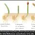 Elementos de  coordinación química y nerviosa