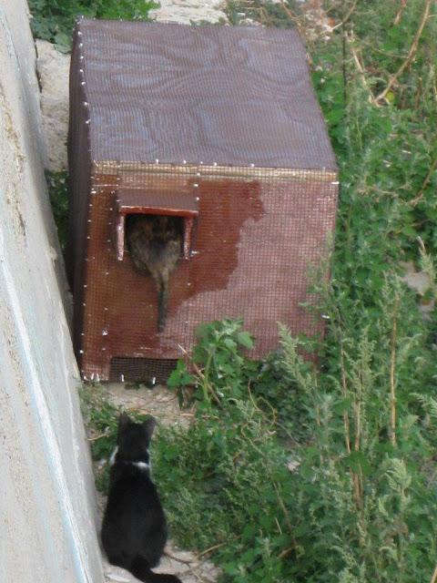 Haz un macro refugio contra el fr o para los gatos libres - Casa gatos exterior ...