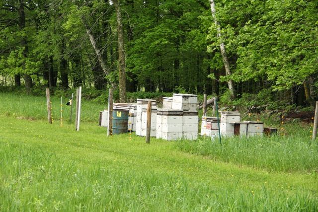 Audubon Center of the North Woods apiary