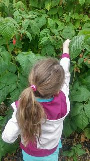 seeking high for fruit picking