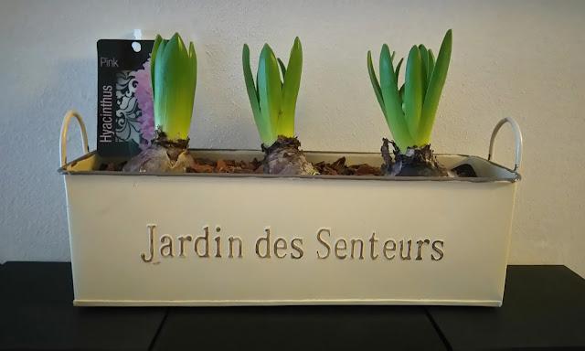 hyacinthe, fleur, bullelodie