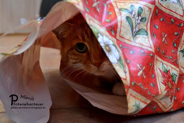 Katze Mimi versteckt sich ängstlich unter Geschenkspapier