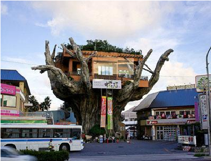 Foto Restoran Diatas Pohon