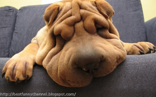 Funny puppy 11