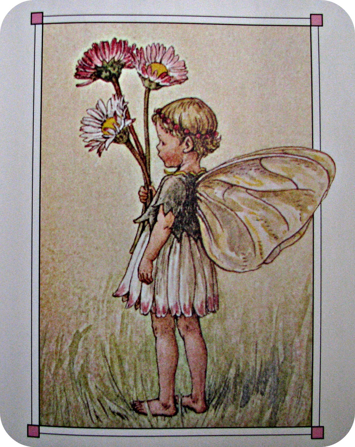 Beauty of the picture book poetry friday the complete book of the the daisy fairy izmirmasajfo