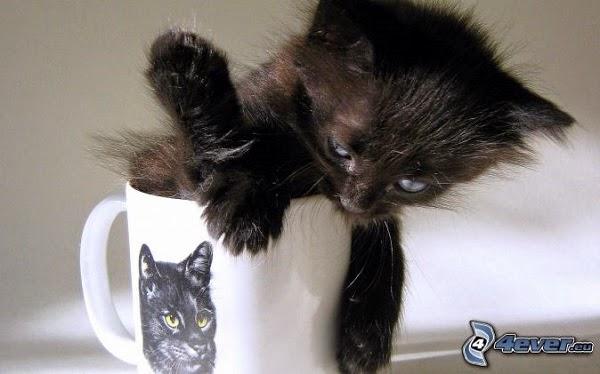 Photo drôle de chaton noir