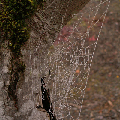 frosty spiderweb photo copyright Jennifer Kistler 2011