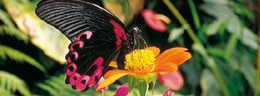 Couverture facebook papillons exotiques