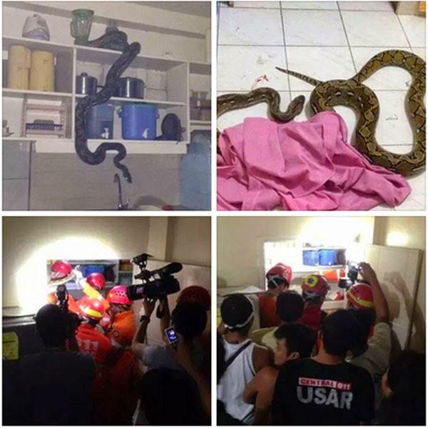 Python in Davao