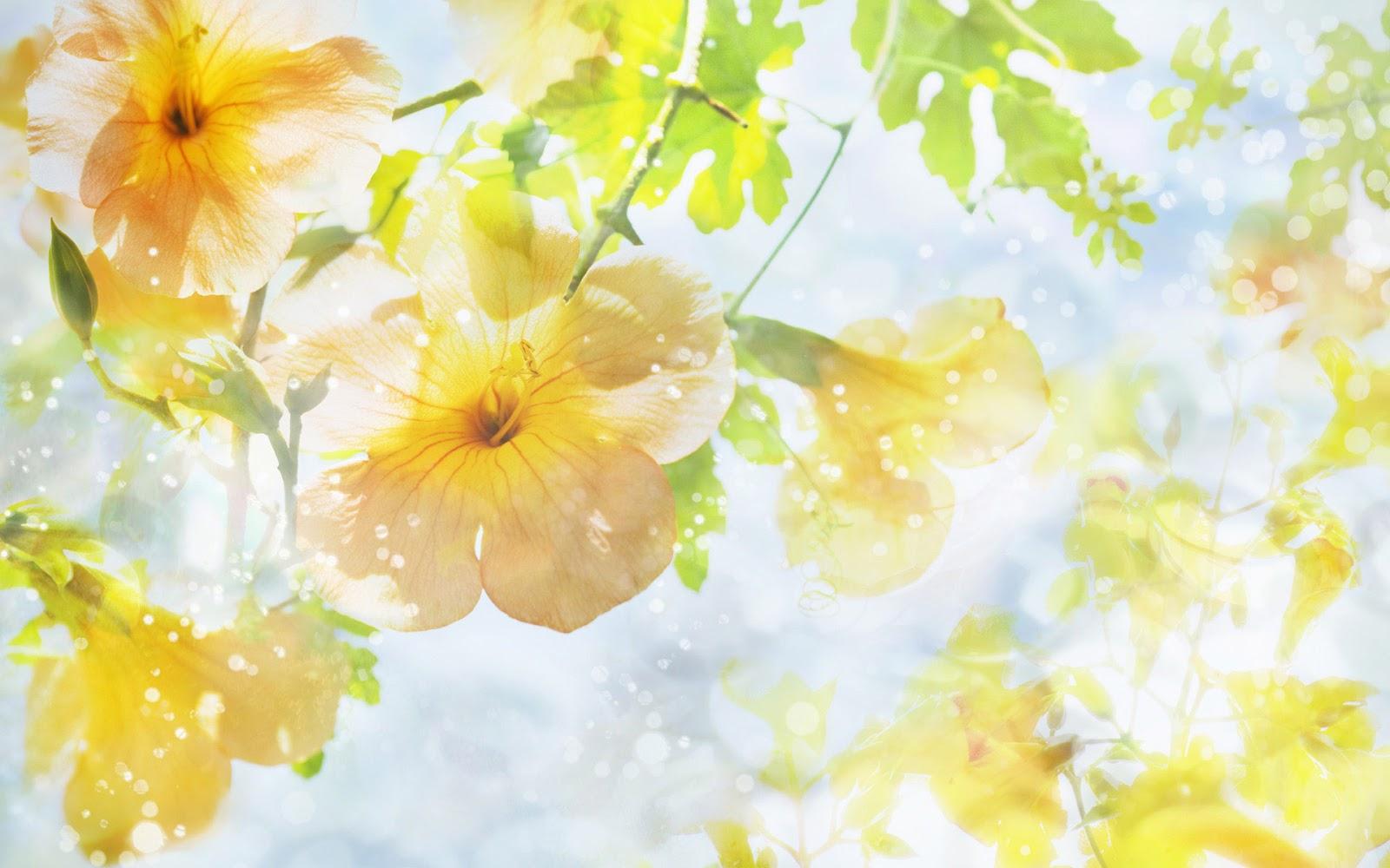 natural flower wallpaper top hd wallpapers