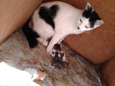 Chibi Selamat melahirkan anak