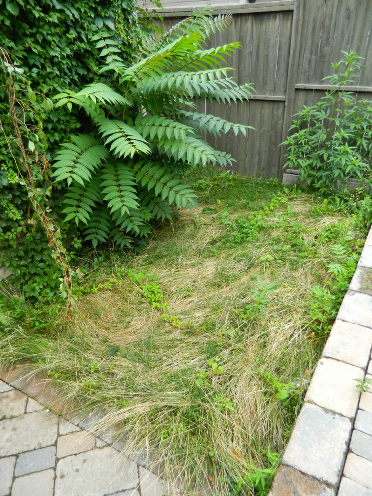 Leslieville garden renovation design before by Paul Jung Gardening Services Toronto