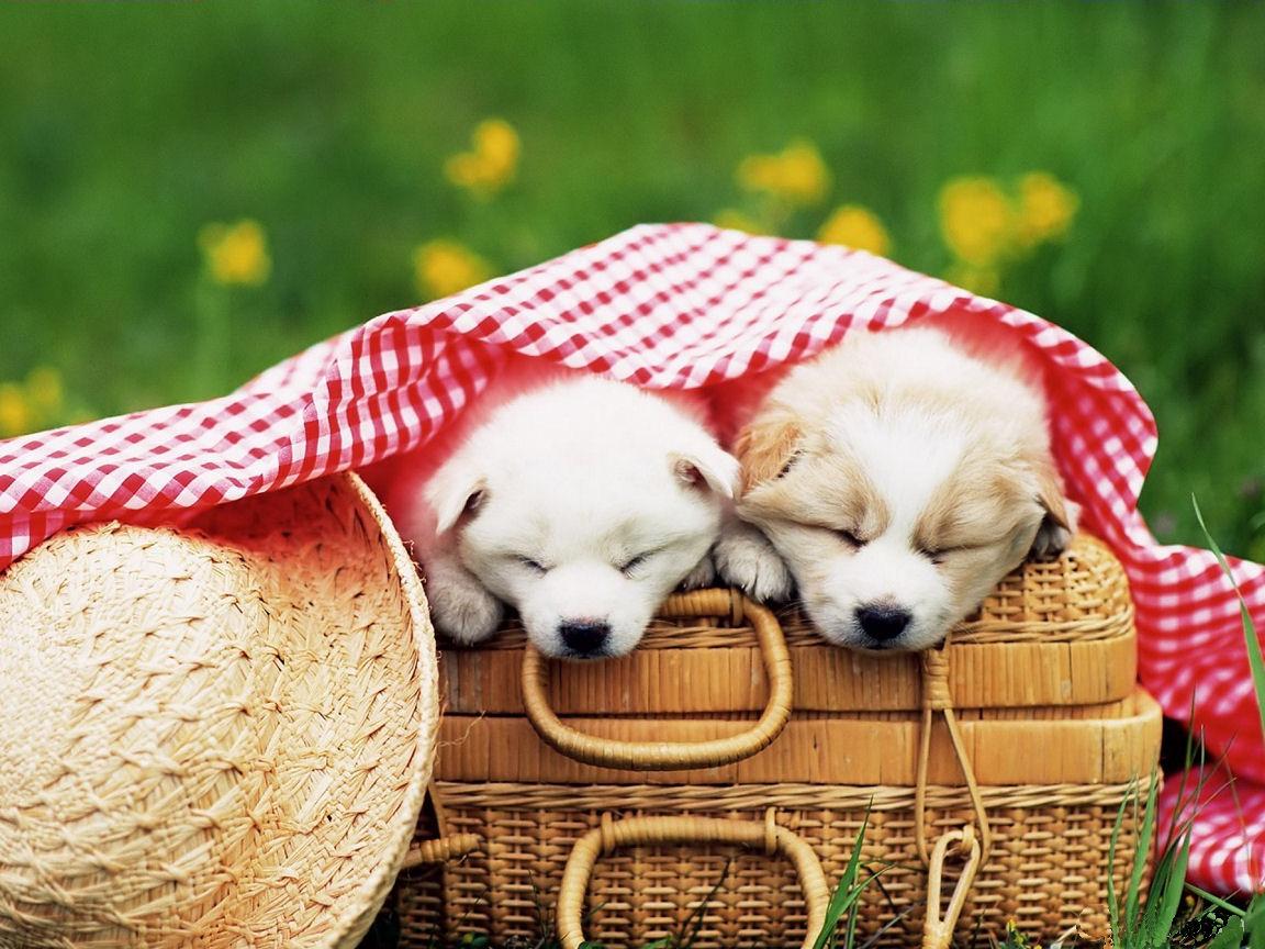 http://3.bp.blogspot.com/-2t1LOpwwP54/UEiMQC2_7fI/AAAAAAAAB38/WkZjSrBfwk4/s1600/cute_puppies5.jpg