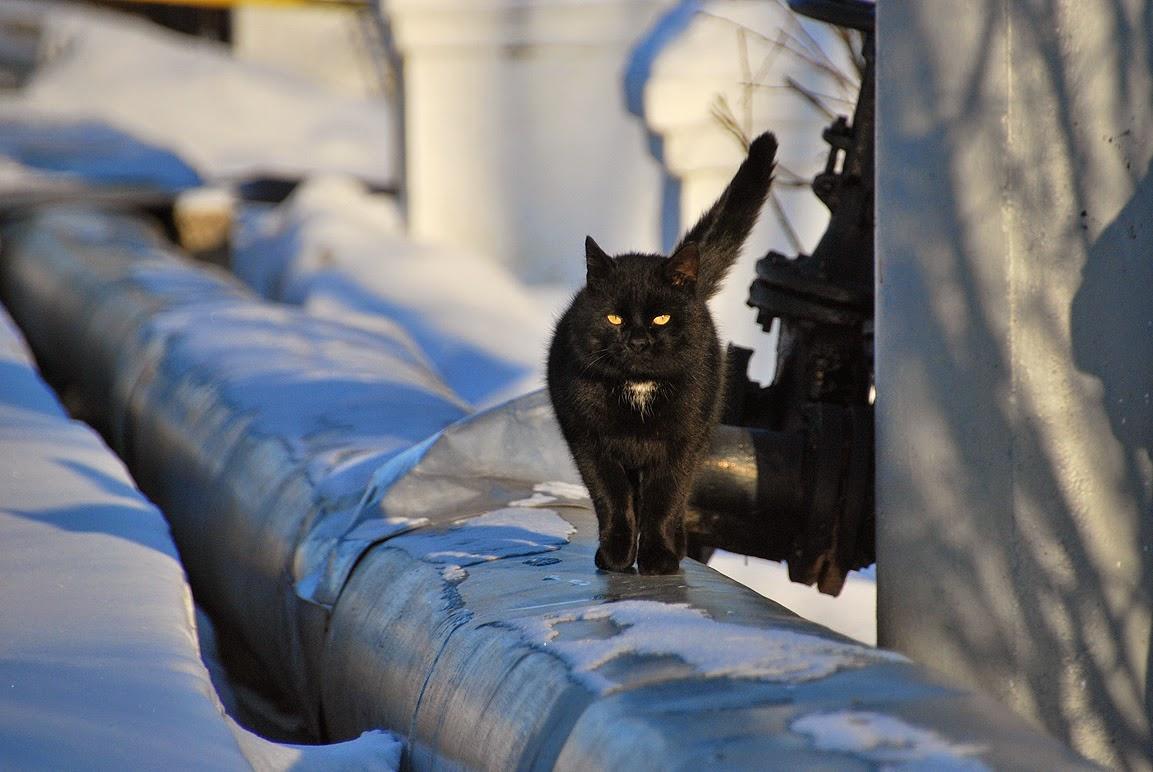 кот в Лысьве