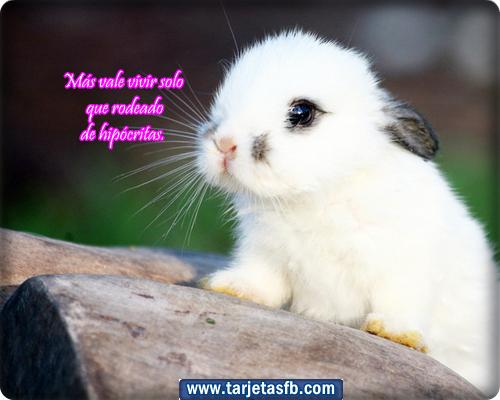 para Amor y Amistad: Tarjetas lindas de conejo para etiquetar en tu