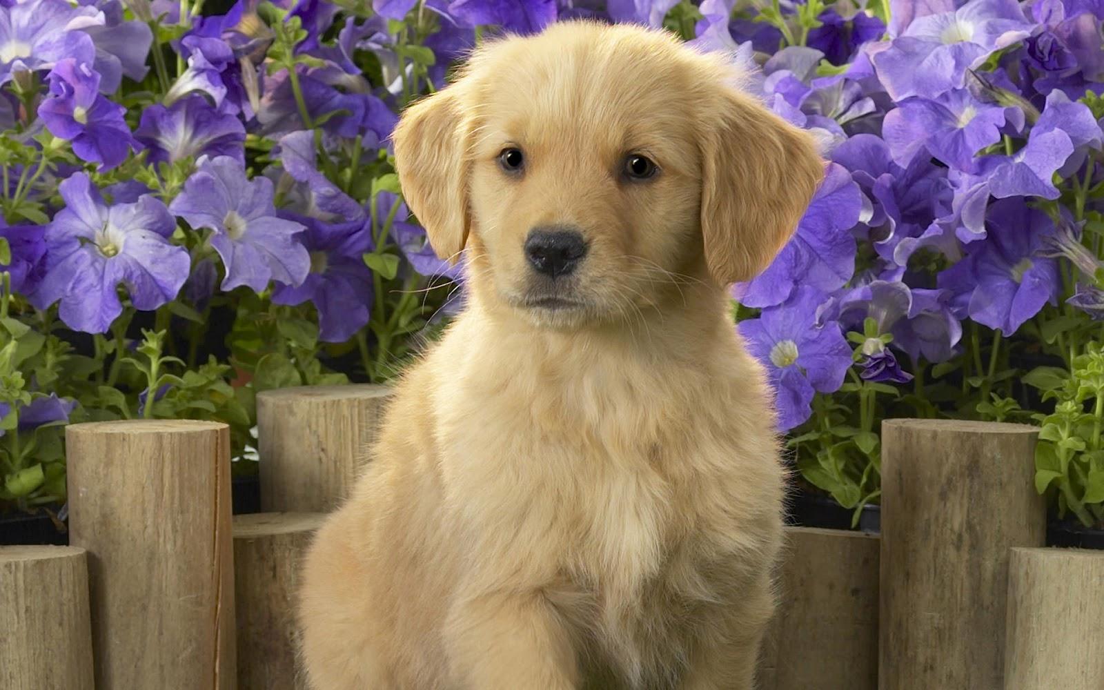Schattige lieve hond en paarse bloemen hd honden achtergrond foto