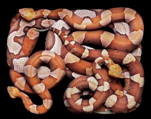 http://3.bp.blogspot.com/-2u9DquRObKE/TpbPni5P-uI/AAAAAAAADA0/wsrJK6sBzKU/s1600/256710%252Cxcitefun-fascinating-snakes-03.jpg