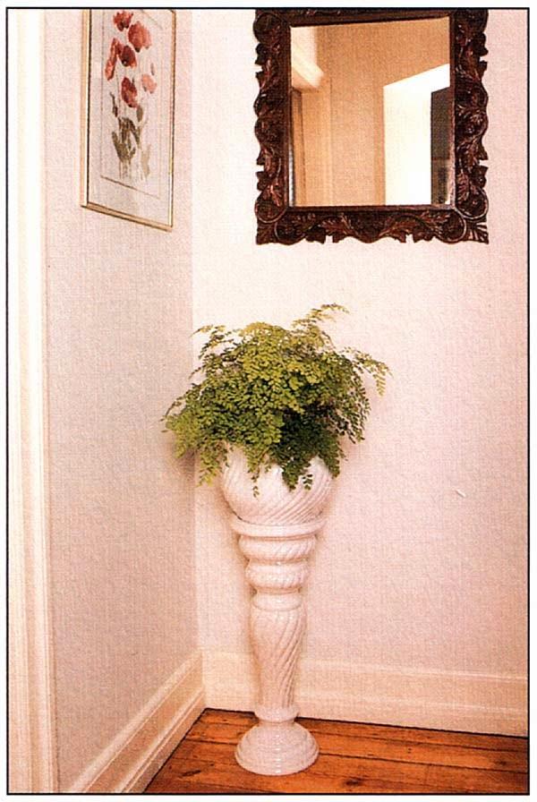 Если белые или светлые стены отражают свет, некоторые растения неплохо существуют даже вдали от окна