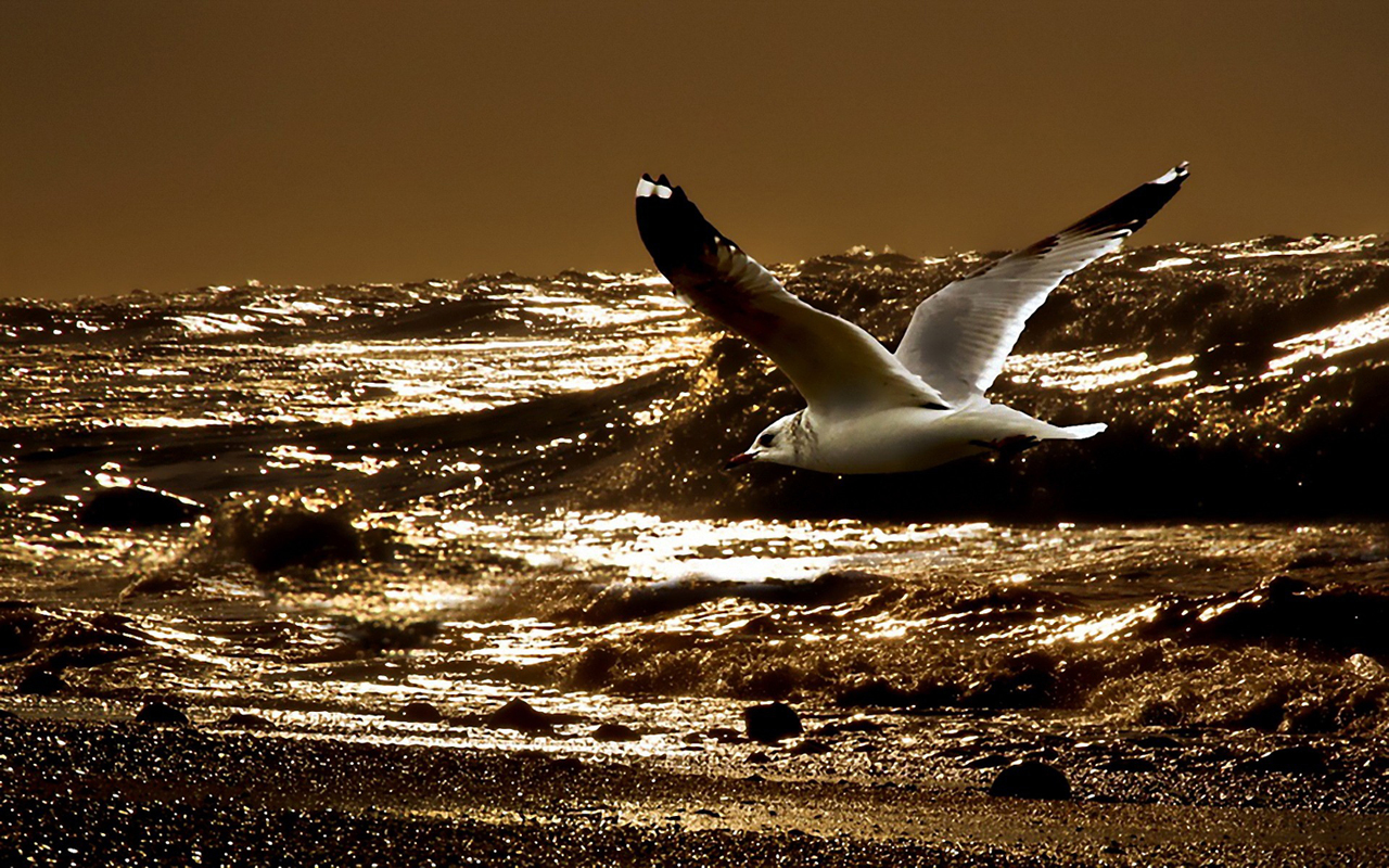 http://3.bp.blogspot.com/-2uniaUg0lH4/T1iHQnS2goI/AAAAAAAAAoA/Xbiah5dnSFw/s1600/Seagul-Flying-Over-The-Sea_1280x800_7554.jpg
