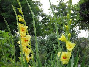 田舎暮らし物件の古民家で田舎暮らし Blog の花