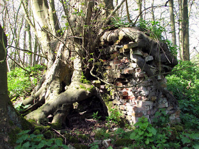 Tree growing over an old brick wall, Arminghall, © Copyright Evelyn Simak and licensed for reuse under the Creative Commons Licence.