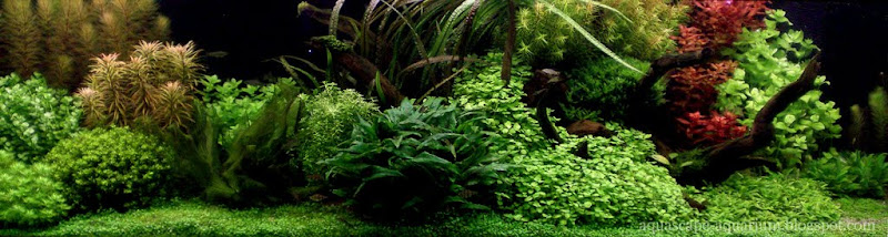 Dutch Planted Aquascaping Rules and  Techniques