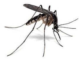 penyebab penyakit malaria