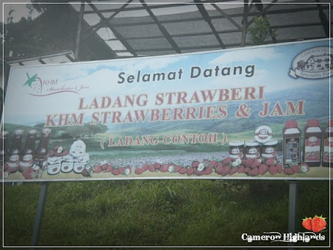 Cameron Highlands Trip | All about Stroberiess..
