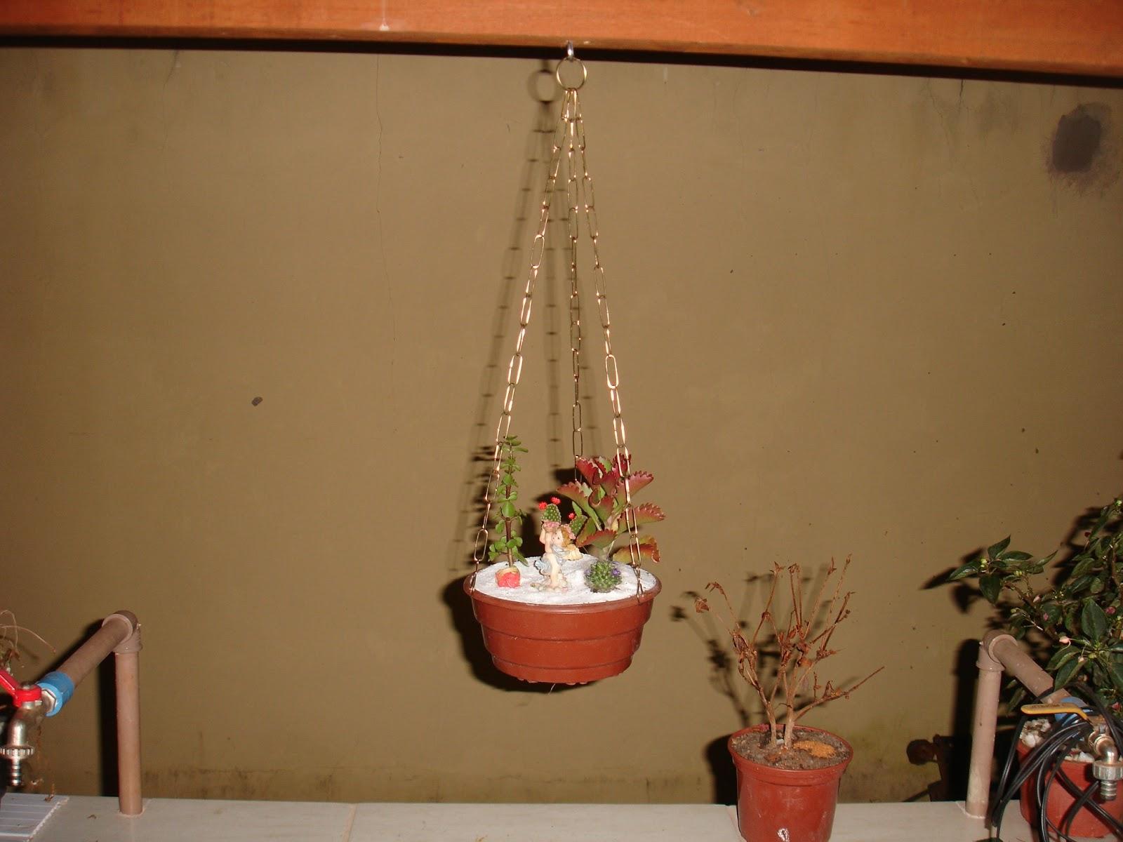 mini jardim cactos suculentas : mini jardim cactos suculentas: com Cactos e Suculentas.: Mini Jardim Suspenso de Cactos e Suculenta