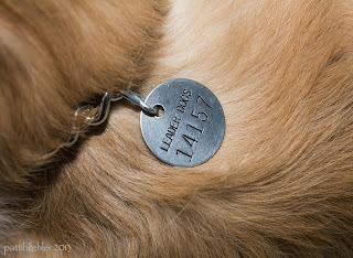 "A close-up shot of a round metal tag that says ""Leader Dogs"" with the number 14157 beneath it. The tag is attached to a chain collar and it is resting on the golden fur of a golden retriever dog."