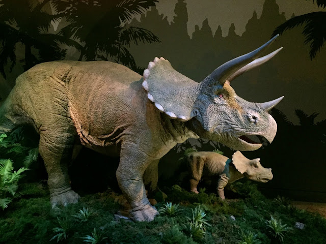 A model of a Triceratops