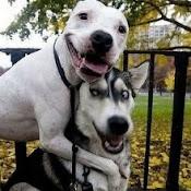 Dog love is PURE love