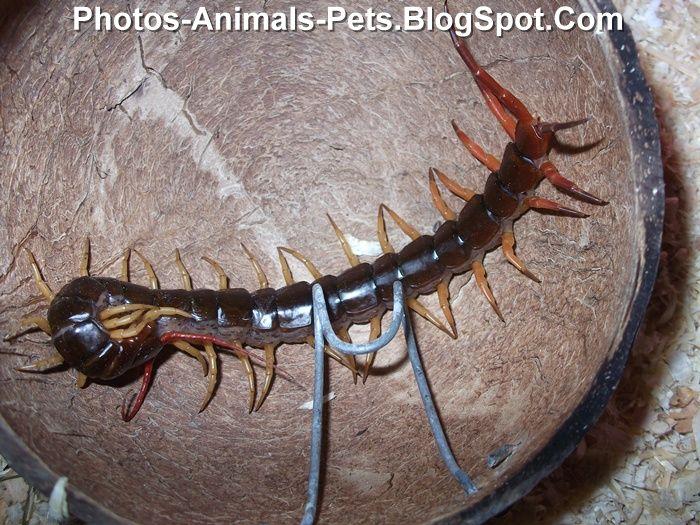 Photo of centipede