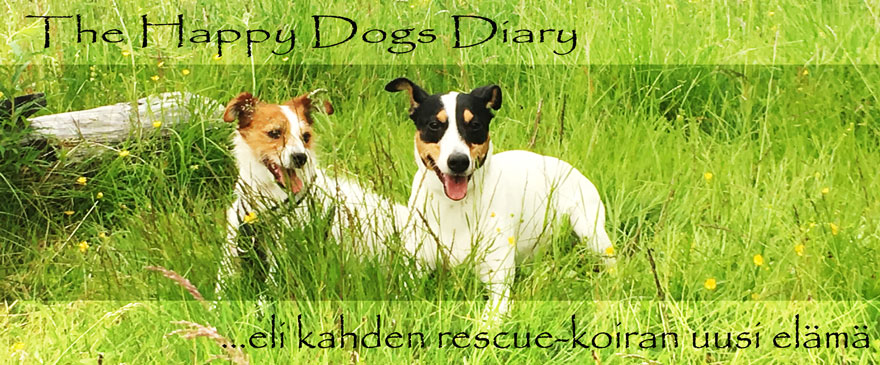 The Happy Dogs Diary