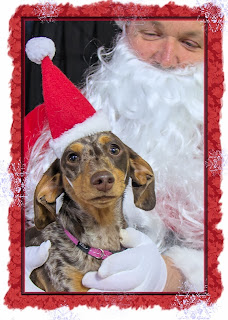 http://www.redbubble.com/people/sassyg/works/10985820-a-very-doxie-christmas-3?p=greeting-card