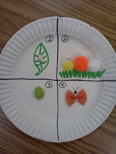Butterfly Life Cycle Diagram Using a paper plate white bean for the egg pompoms for the caterpillar shell pasta dyed green for the cocoon and dyed ... & The Very Hungry Caterpillar \u2014 Lovely Commotion