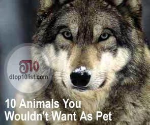 Top 10 Animals You Wouldn't Want As Pet