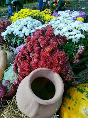 Хризантемы на выставке цветов